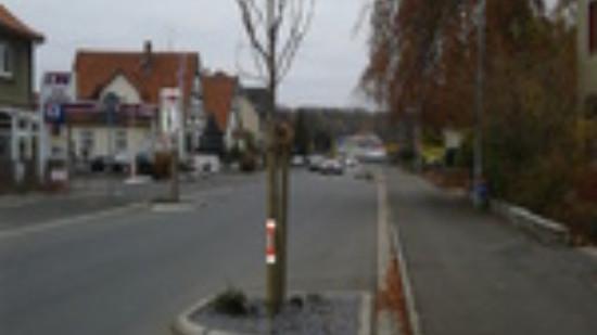 2014_11_21 Hauptstraße Baumersatzpflanzung